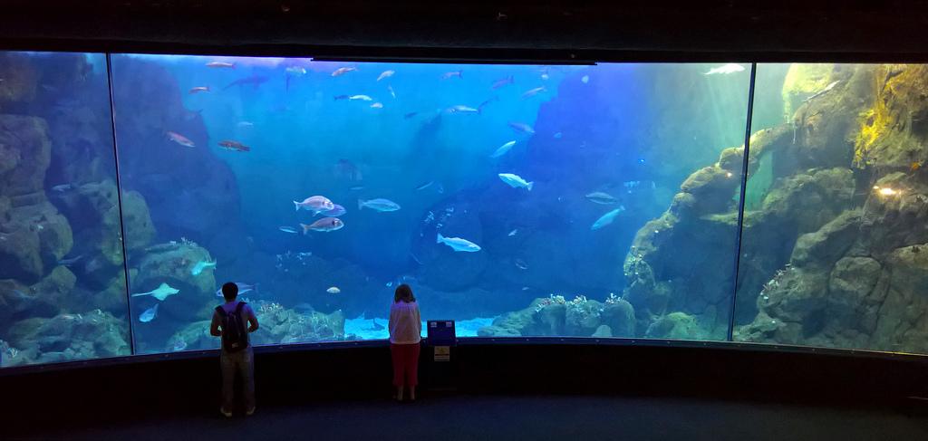 aquarium plymouth