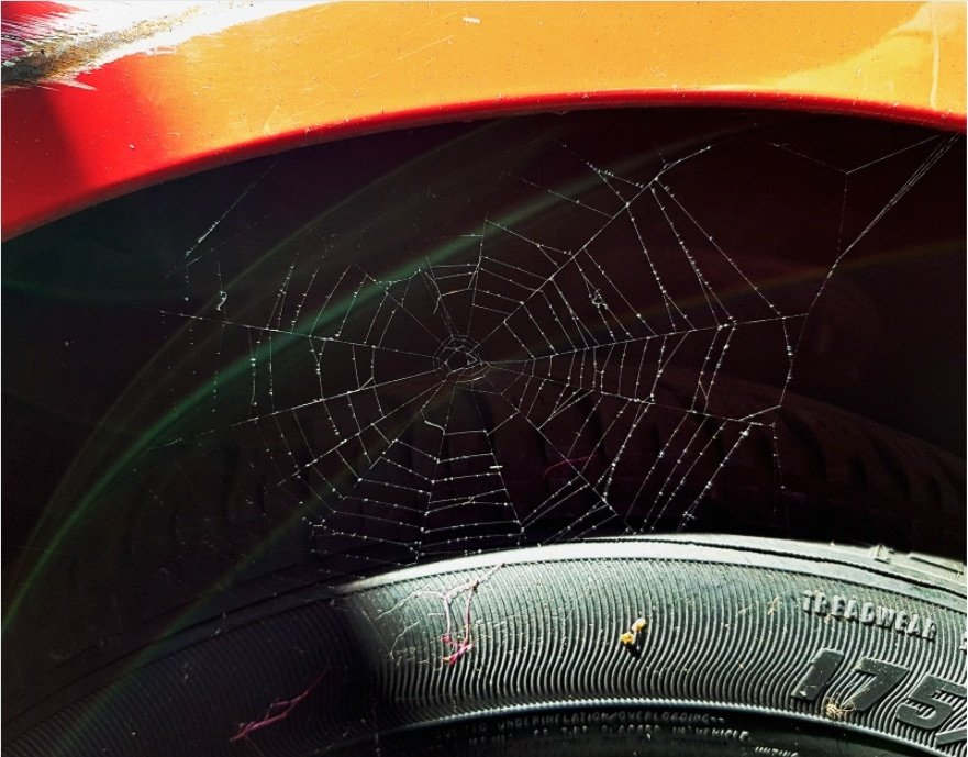 Spiders season